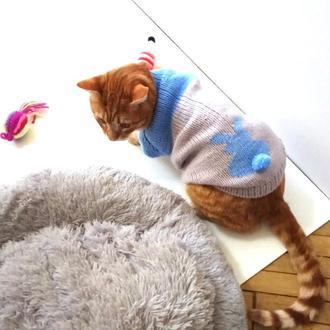 Свитер для кота Зайка
