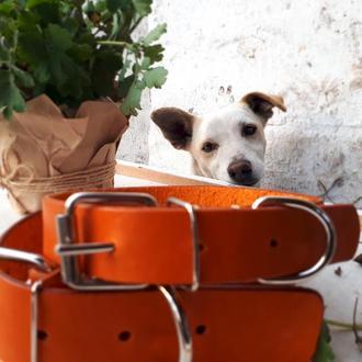 Ошейник для собаки. Кожаный ошейник. Ошейник с гравировкой