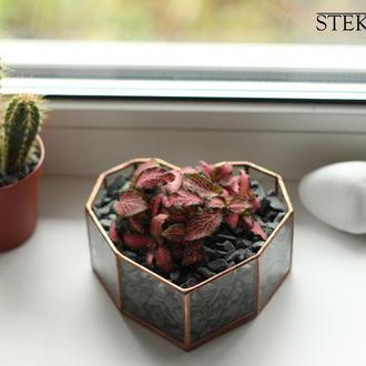 Флорариум №30 micro Heart + набор для посадки композиций из суккулентов, кактусов