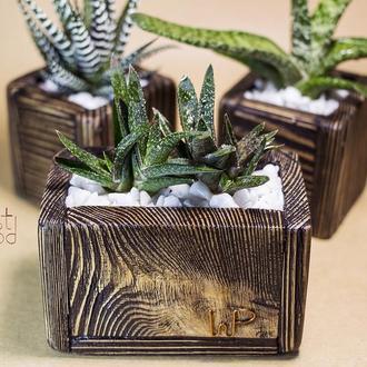 """Деревянный горшок """"Wenge"""" + группа растений (Gasteria cv. Dark dwarf)"""