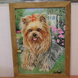 Бурштиновий пес, йоркширський тер'єр з бурштину