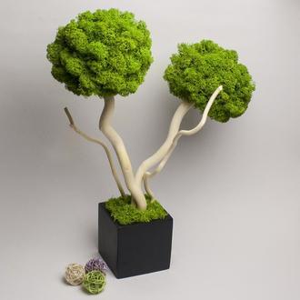 Дерево из стабилизированного мха