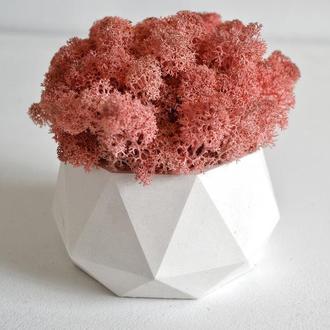 Горшок из бетона с розовым мхом. Кашпо с мхом