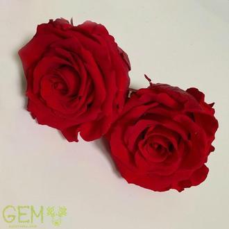 Стабилизированные роза Красная