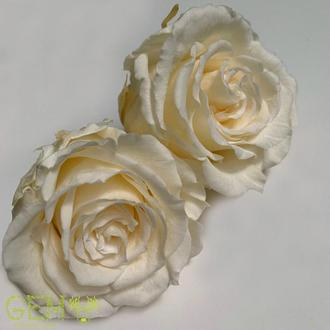 Стабилизированная роза Шампань