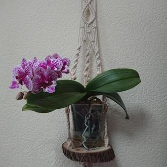 Подвесное кашпо на деревянной подставке с бусинами