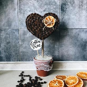 Творчий набір «кавове дерево»