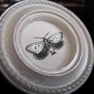 Ночница бабочка. Миниатюрная живопись.