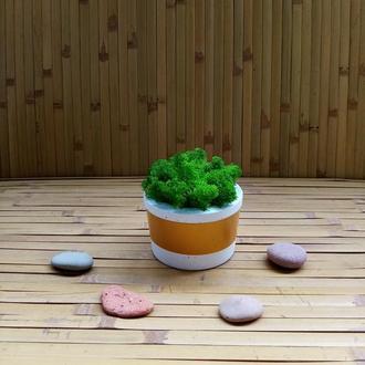Кашпо, вазони, горщики з бетону для кактусів, сукулентів, моху. Еко стиль