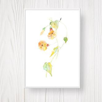 Набір акварельний живопис Польові квіти