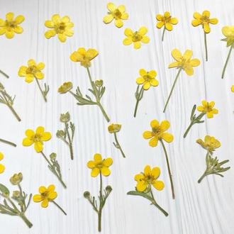 Сухоцветы для эпоксидной смолы. Гербарий. Лютики. Набор 10 штук