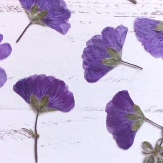Сухоцветы для эпоксидной смолы. Гербарий. Анемона