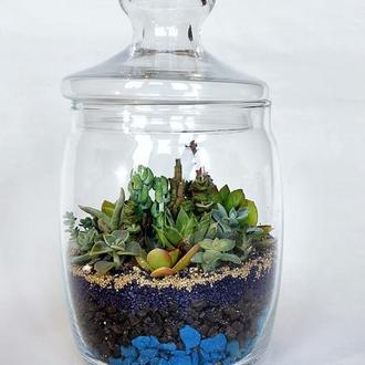 Флорариум с композицией из суккулентов в стеклянной баночке