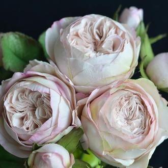 """Роза """"Остин"""", Пионовидная роза (3 шт) Свадебный букет, Букет невесты"""