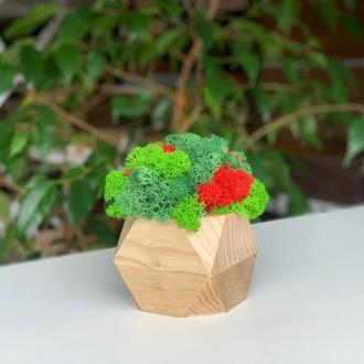 Деревянное кашпо с мхом