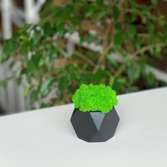Зеленый мох в кашпо