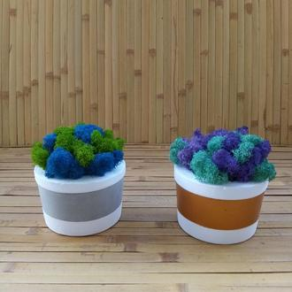 Скандинавський мох ягель у бетонному кашпо. Чудовий подарунок. Частинка природи вдома. Еко декор