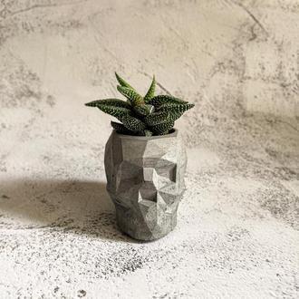 Хавортия в бетонном кашпо. Суккуленты в бетонном горшке