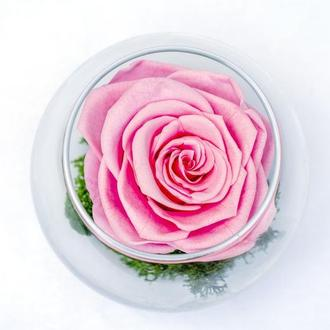 Роза стабілізована у склі.