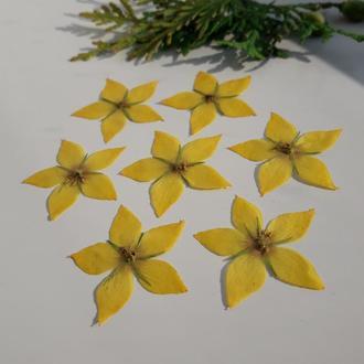 Сухие цветы. Вербейник