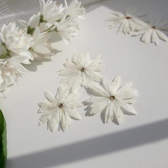 Милые белые цветы (Дейция)
