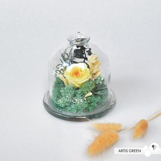 Колба со стабилизированными растениями и розой «Lemon flower» мини