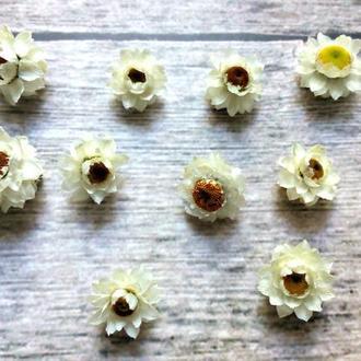 Сухоцветы для эпоксидной смолы. Аммобиум. 1шт.