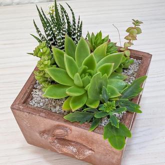 Флорариум в бетонном кашпо Rabbithole Crafts Terracota