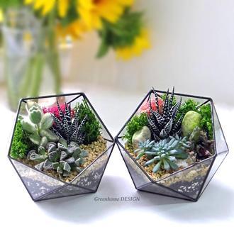 Флорариум с живыми растениями!