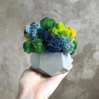 Бетонный горшок кашпо с стабилизированным мхом 10*10см / Бетонное кашпо из бетона для цвето