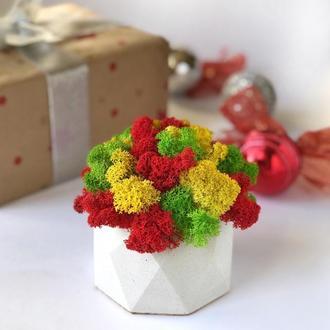 Бетонный горшок кашпо для цветов с стабилизированным мхом 10*12см / Бетонное кашпо из бетона для цвето