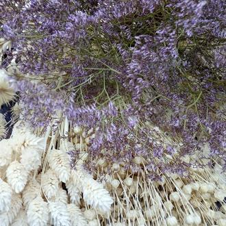 Кермек сухоцвет