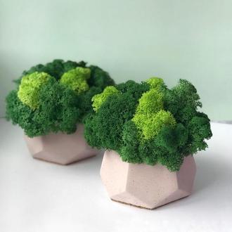 Бетонный горшок кашпо для цветов с стабилизированным мхом 10*10см / Бетонное кашпо из бетона для цвето