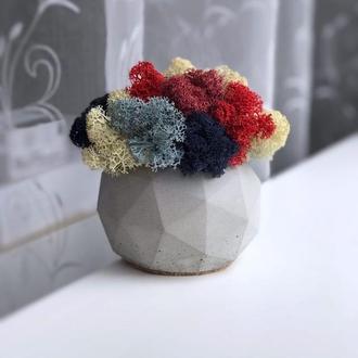 Бетонний горщик кашпо з стабілізованим мохом 10*12 см / Бетонное кашпо из бетона для цветов K3