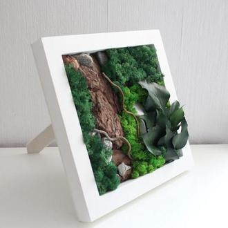 Картина з стабілізованого моху і рослин