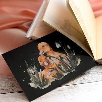 Акварельна листівка Каченята у проліска