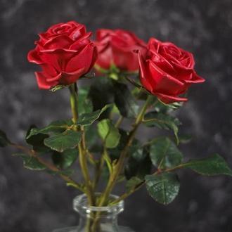 Букет красных роз.