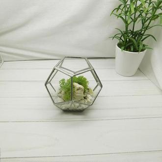 Флорариум стеклянный