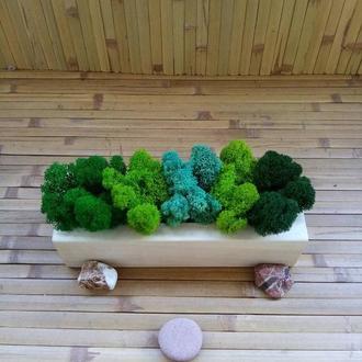 Скандинавський мох ягель в дерев'яному кашпо. Екодекор дому, офісу, ресторану, готелю.