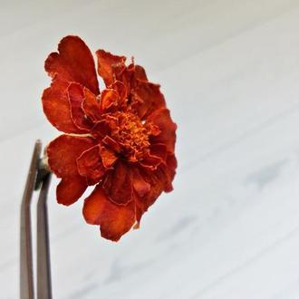 Сухоцвет. Чернобривцы  мелкие для декора