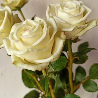 Букет роз. Розы в подарок.