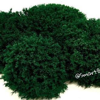 Стабилизированный мох Ягель Темно-зеленый Dark Green 50 грамм