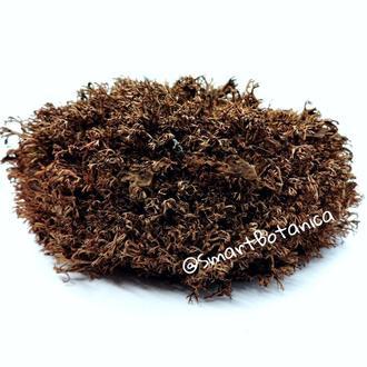 Стабилизированный мох Ягель Коричневый 50 грамм