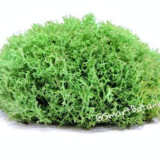 Стабилизированный Мох Ягель Светло-зеленый 100 грамм