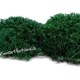 Стабилизированный мох Ягель Темно-зеленый Dark Green 0,5 кг