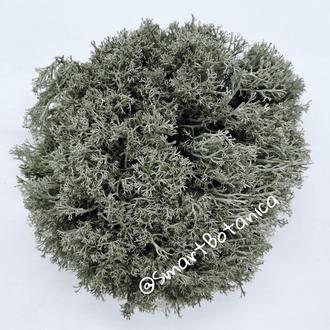Стабилизированный мох Ягель Серый 0,5 кг