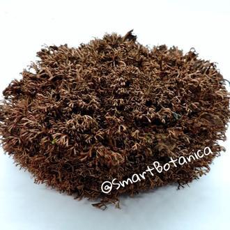 Стабилизированный мох Ягель Коричневый 0,5 кг