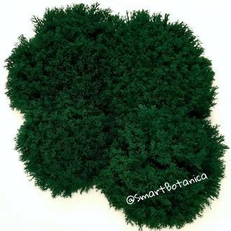 Стабилизированный мох Ягель Темно-зеленый Dark Green 1 кг