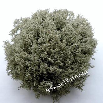 Стабилизированный мох Ягель Серый 1 кг