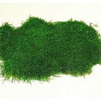 Мох плоский стабилизированный 1кв/м зеленый